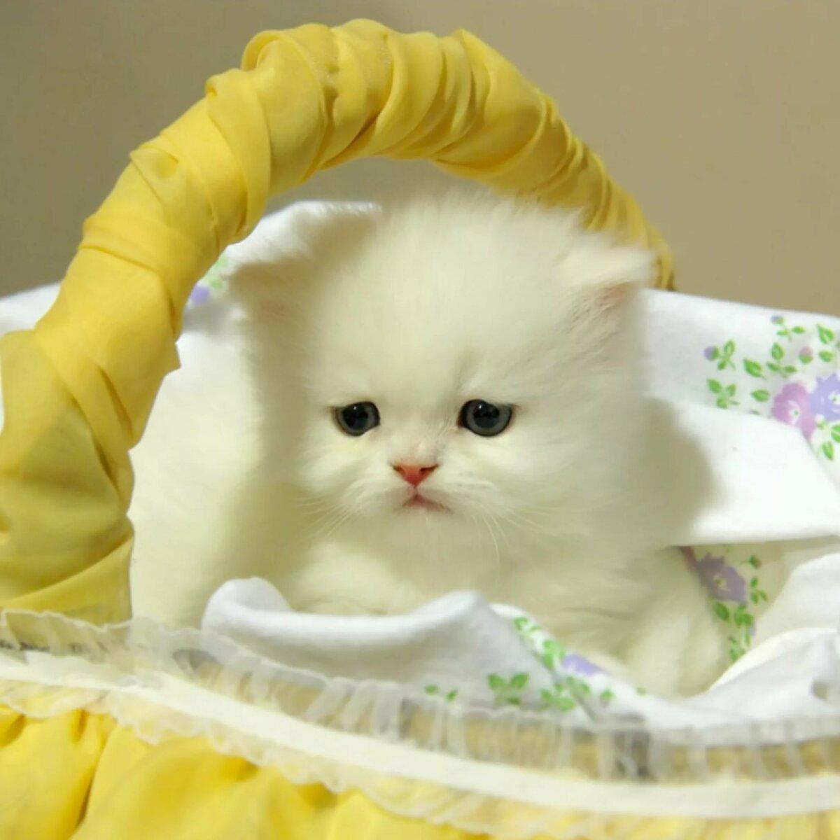 Красивая кошка гифы, апп открытки днем