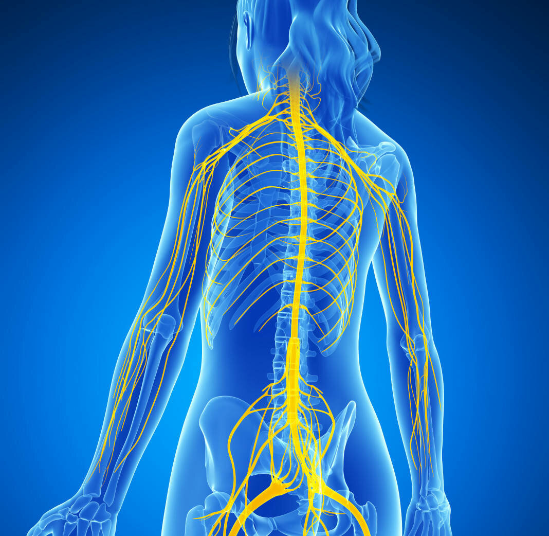 нервы человека фото организм