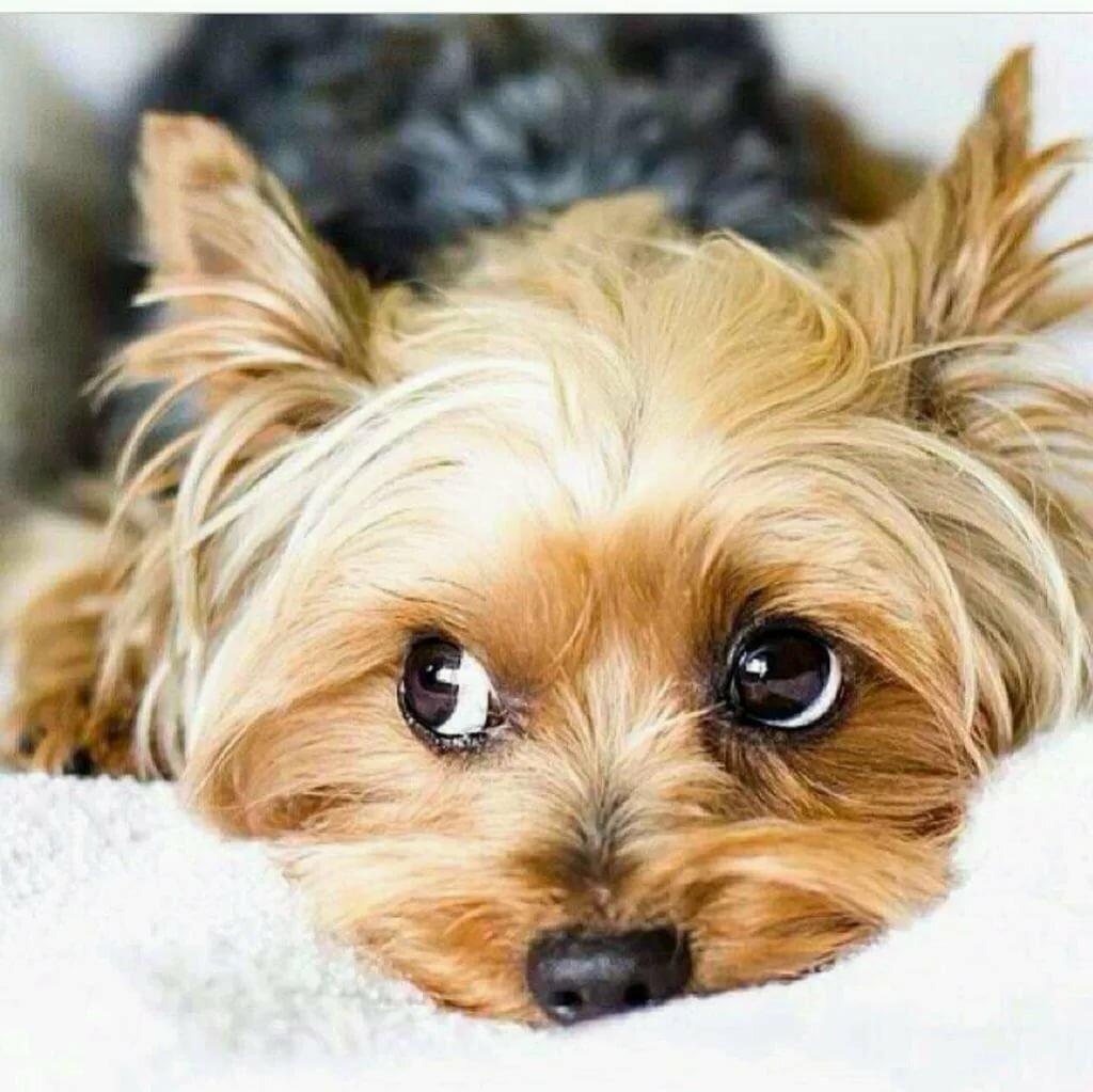 Разных языках, порода собак картинки с надписями