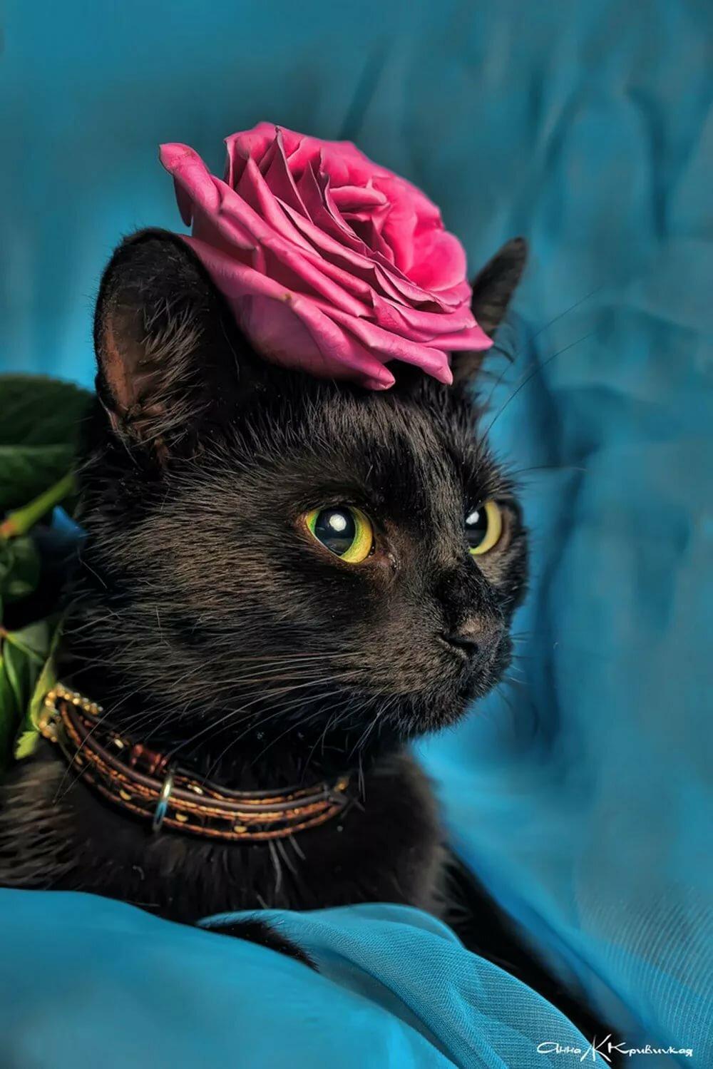Картинки черные кошки в розах