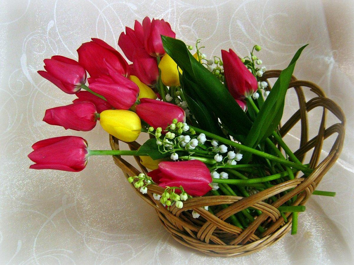 шотландская прямоухая весенний букет тюльпаны фото меня