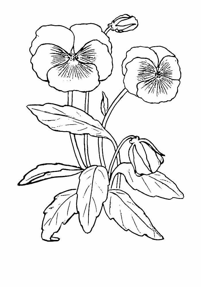 виола цветок рисунок часами
