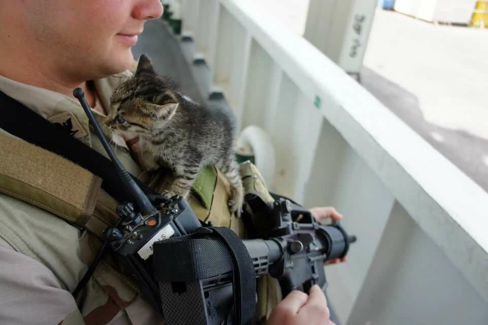 Коты в форме спецназа