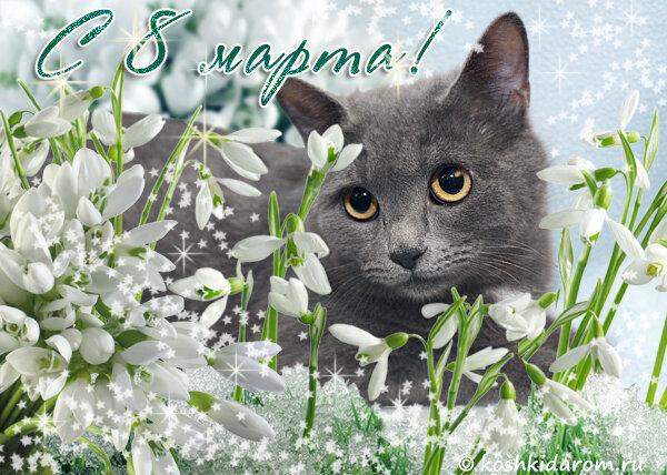 8 марта открытка кот