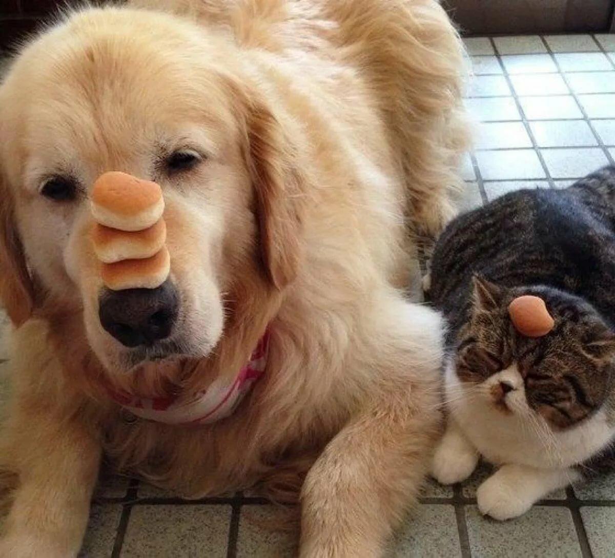 Приколы с котами и собаками картинки