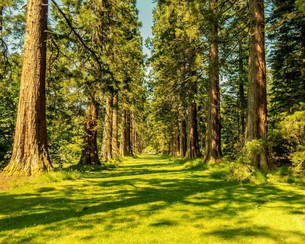 Красивые фото в лесу