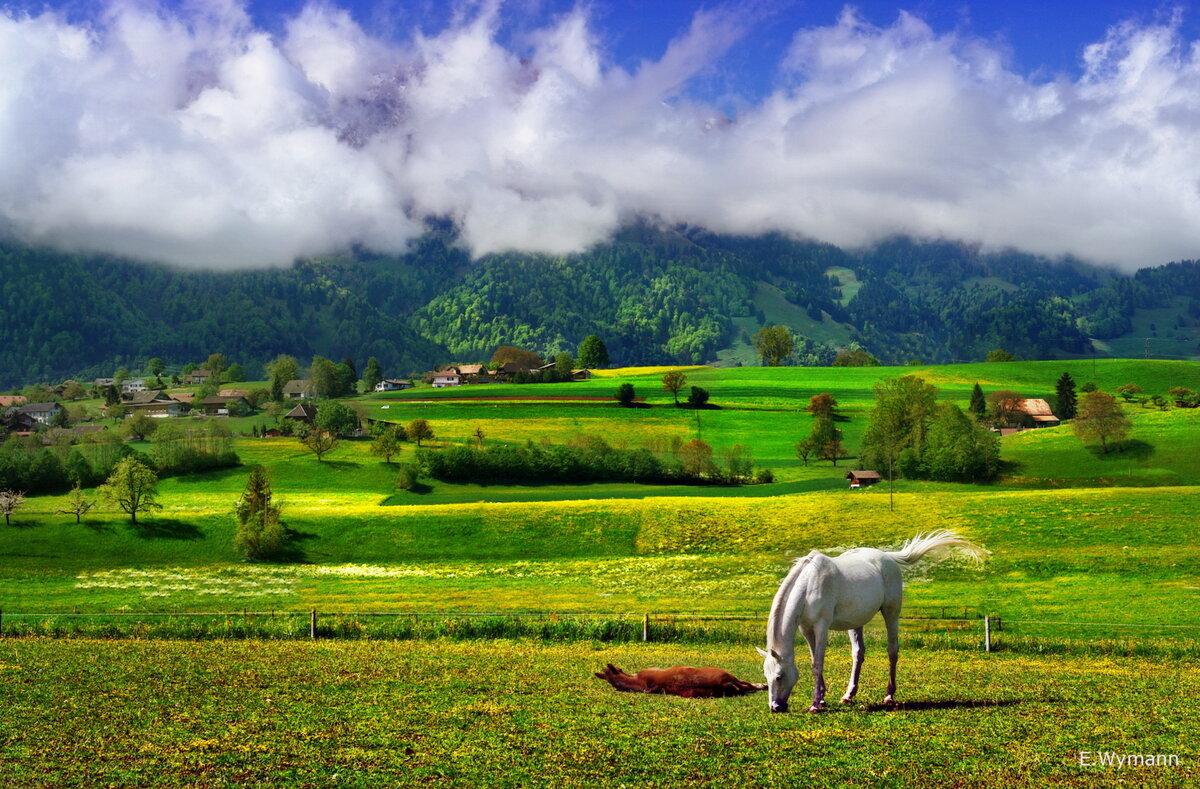 майский пейзаж