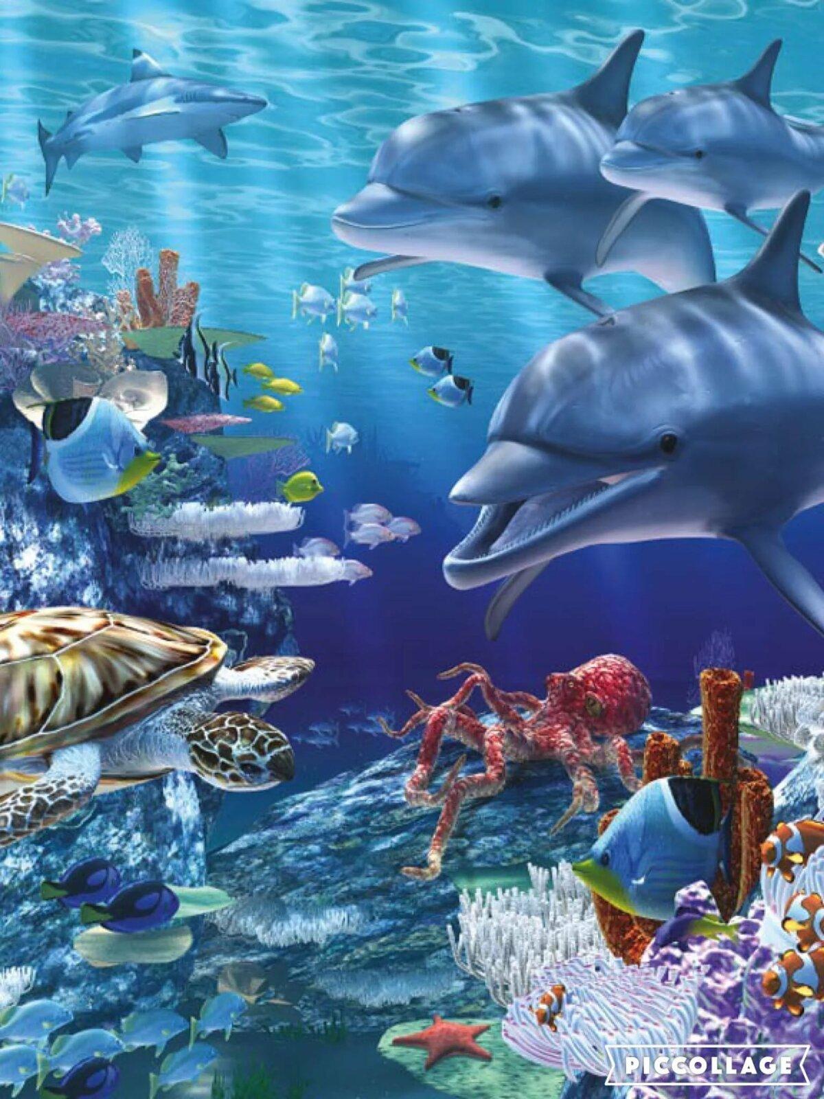 что картинки морских жителей дельфины благодаря