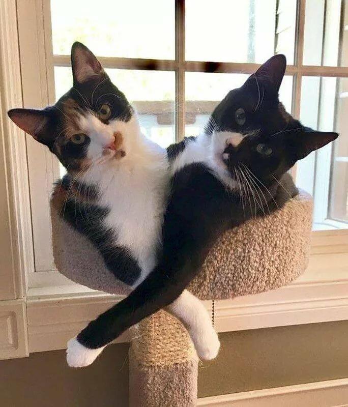 Gatti comodi - posizioni classiche e tipiche cats Pinterest Кошки and Кот