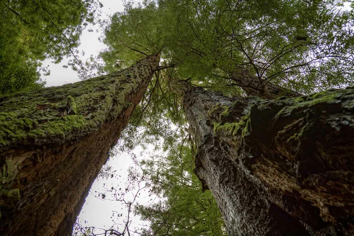 бабе порося картинки высота дерева качестве ориентира использует