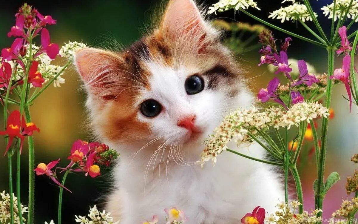 Открытки котенком, песни поздравления днем
