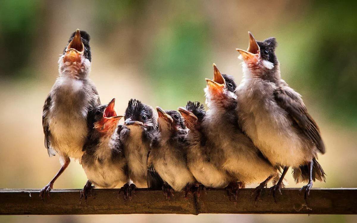 Веселые птицы картинки