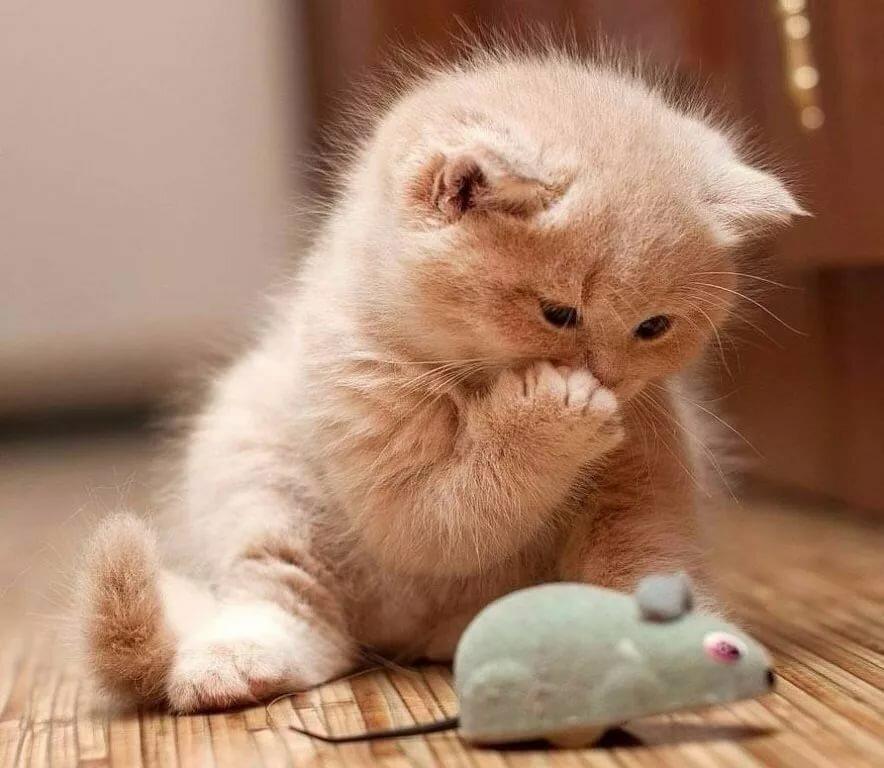 Картинки котят смешных и милых с милыми надписями