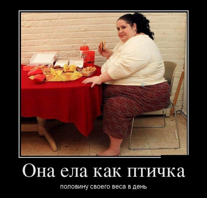 Смешные картинки о толстых