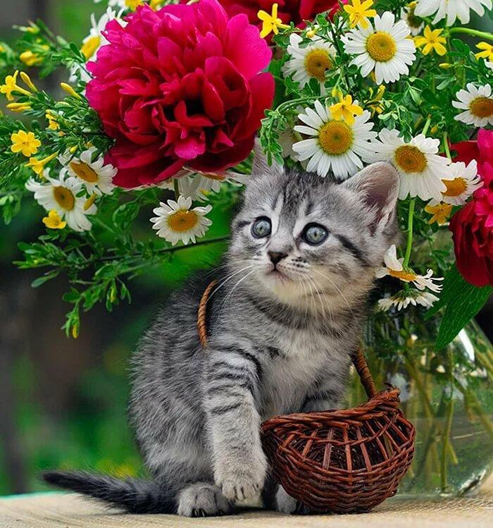 Открытка для котика, красивые открытки