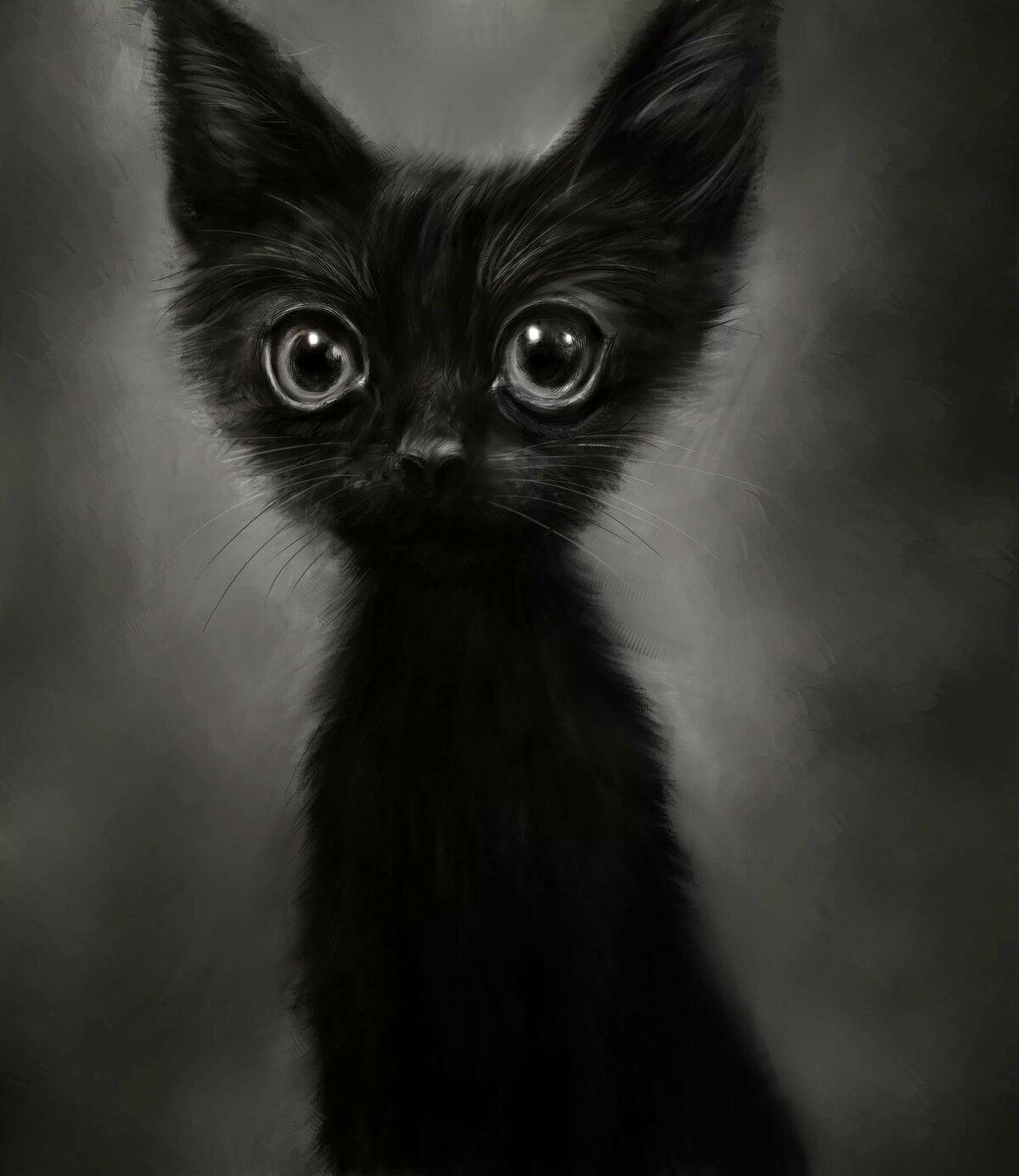 Открытку поздравлением, черный кот картинки прикольные смешные