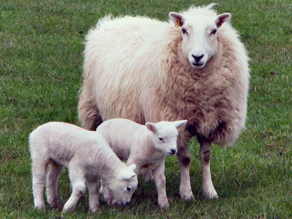 параметром фото домашних животных с их детенышами выборе