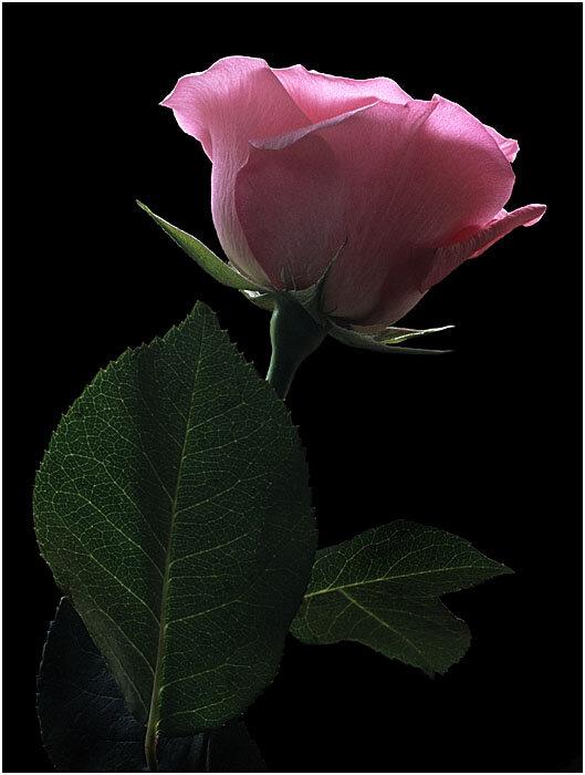 Красивые цветы картинки гиф