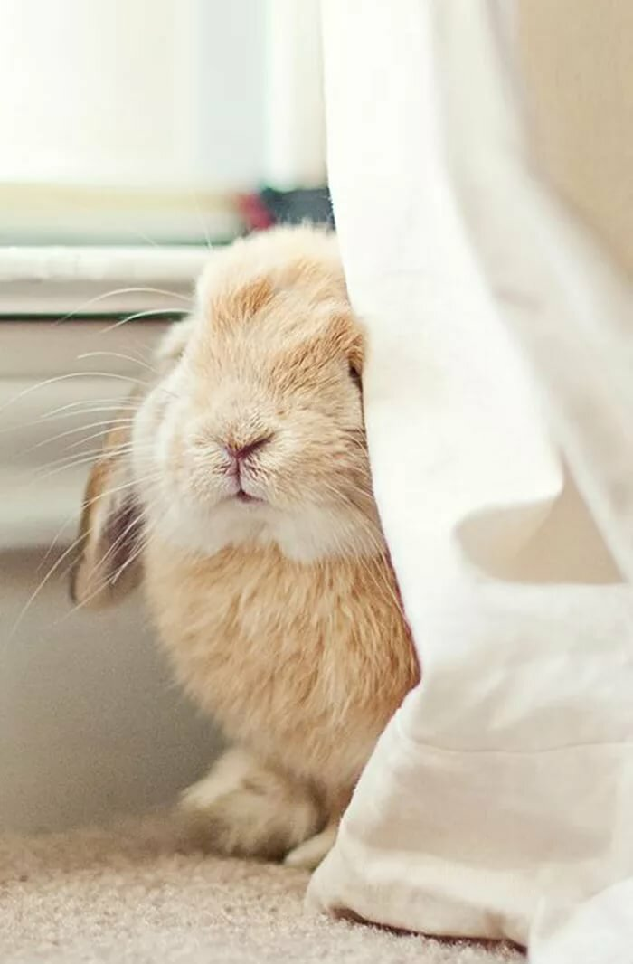 Смешные картинки с зайцами доброе утро, подруге днем свадьбы