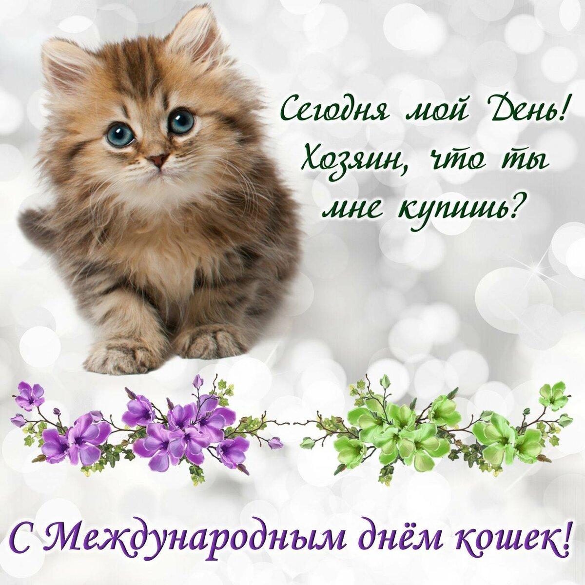 наименование поздравления с всемирным днем кошек 8 августа такого