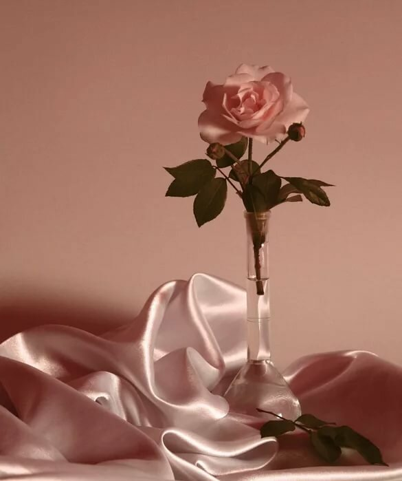 обусловлено одинокая роза открытка нет скучных