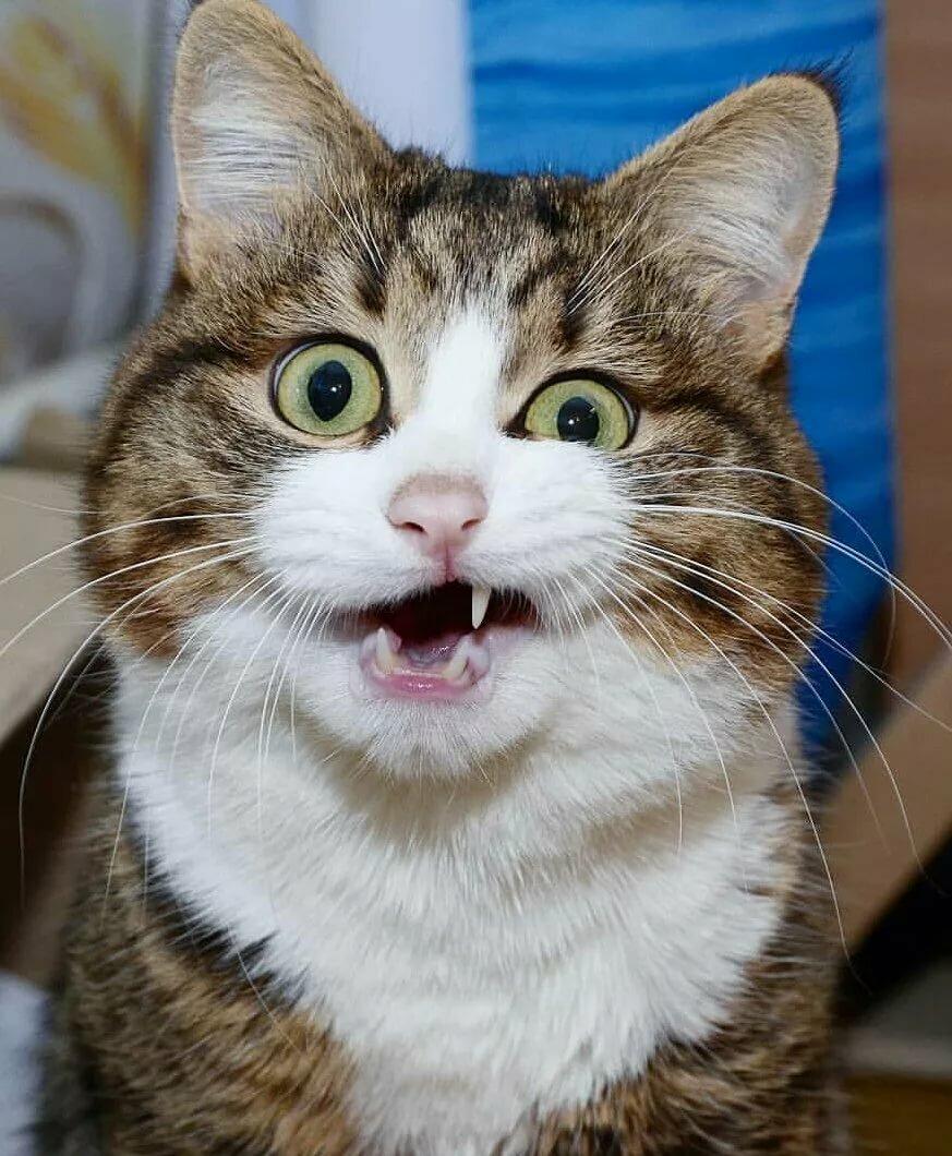 Смешные картинки с удивленным лицом, нарисовать картинки кошками