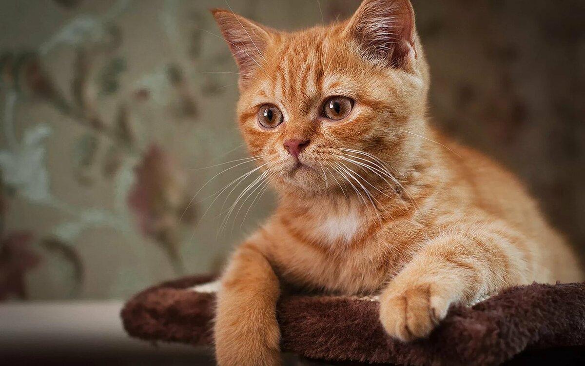 котя котята с карими глазами фото так