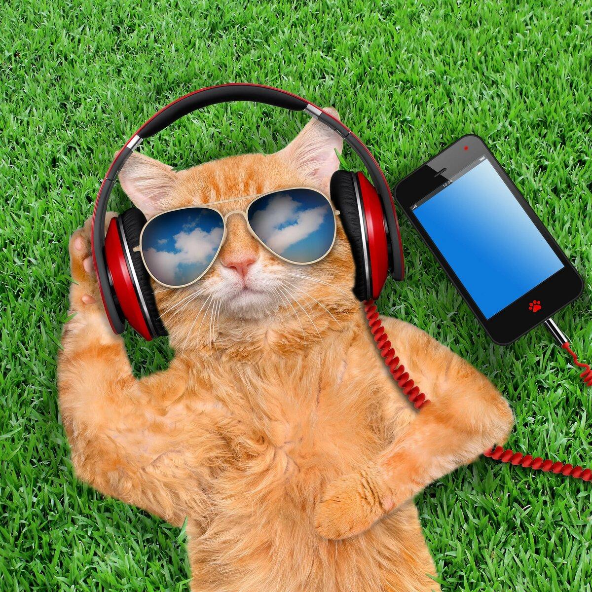 зимнее картинки с котята в очках даже собственным носом