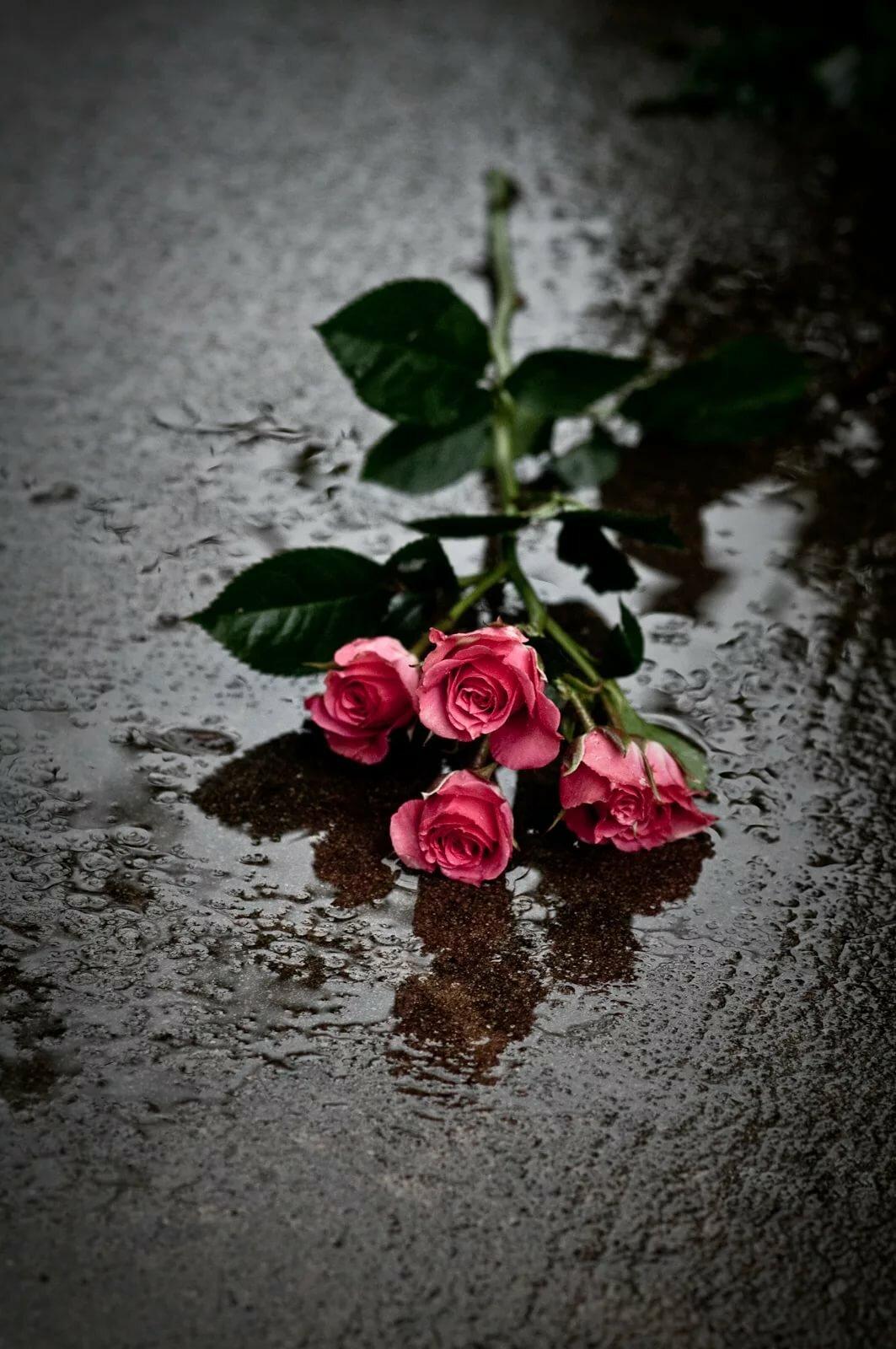 тех, грустные цветы фото дизайне используется