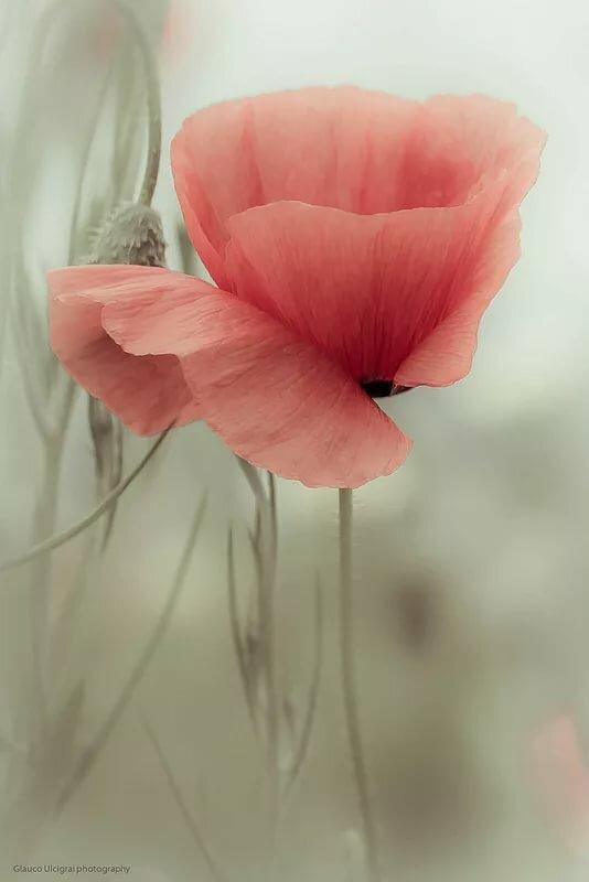 Картинка нежные цветы красные