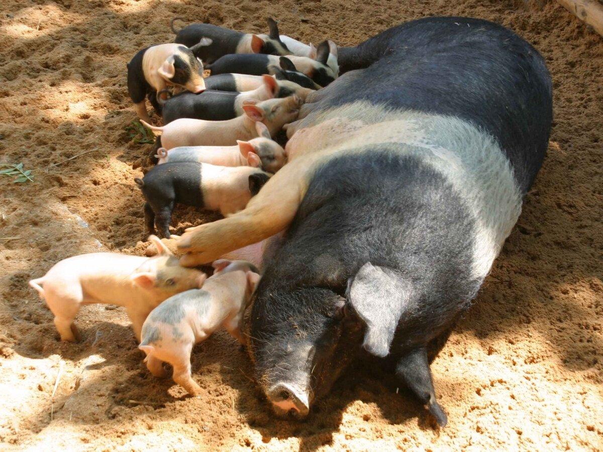 Картинки кормящие животные