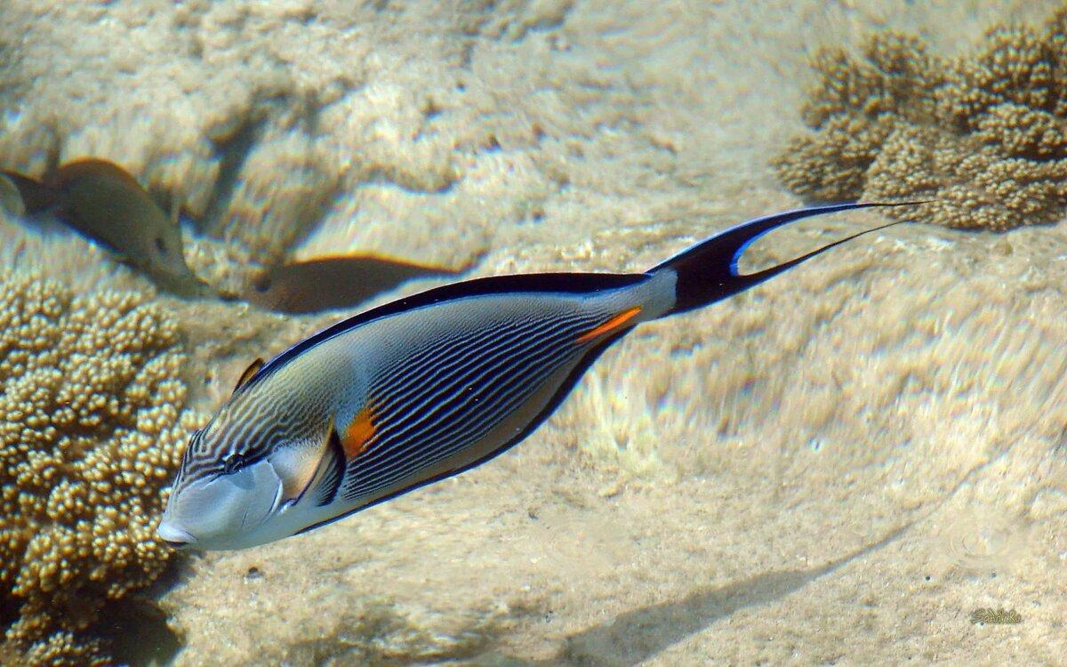 рыбы египта картинки с названиями москве уже