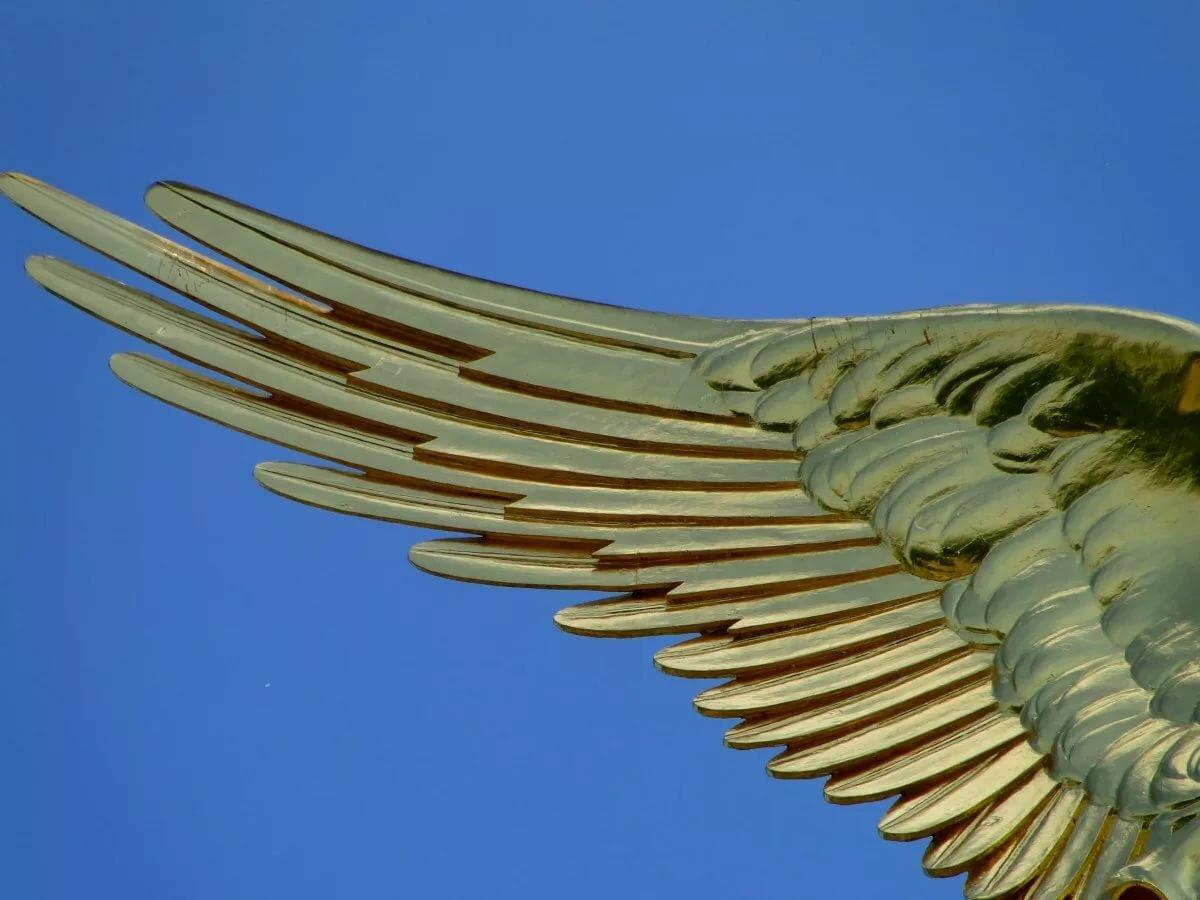 крыло птицы фотографии это