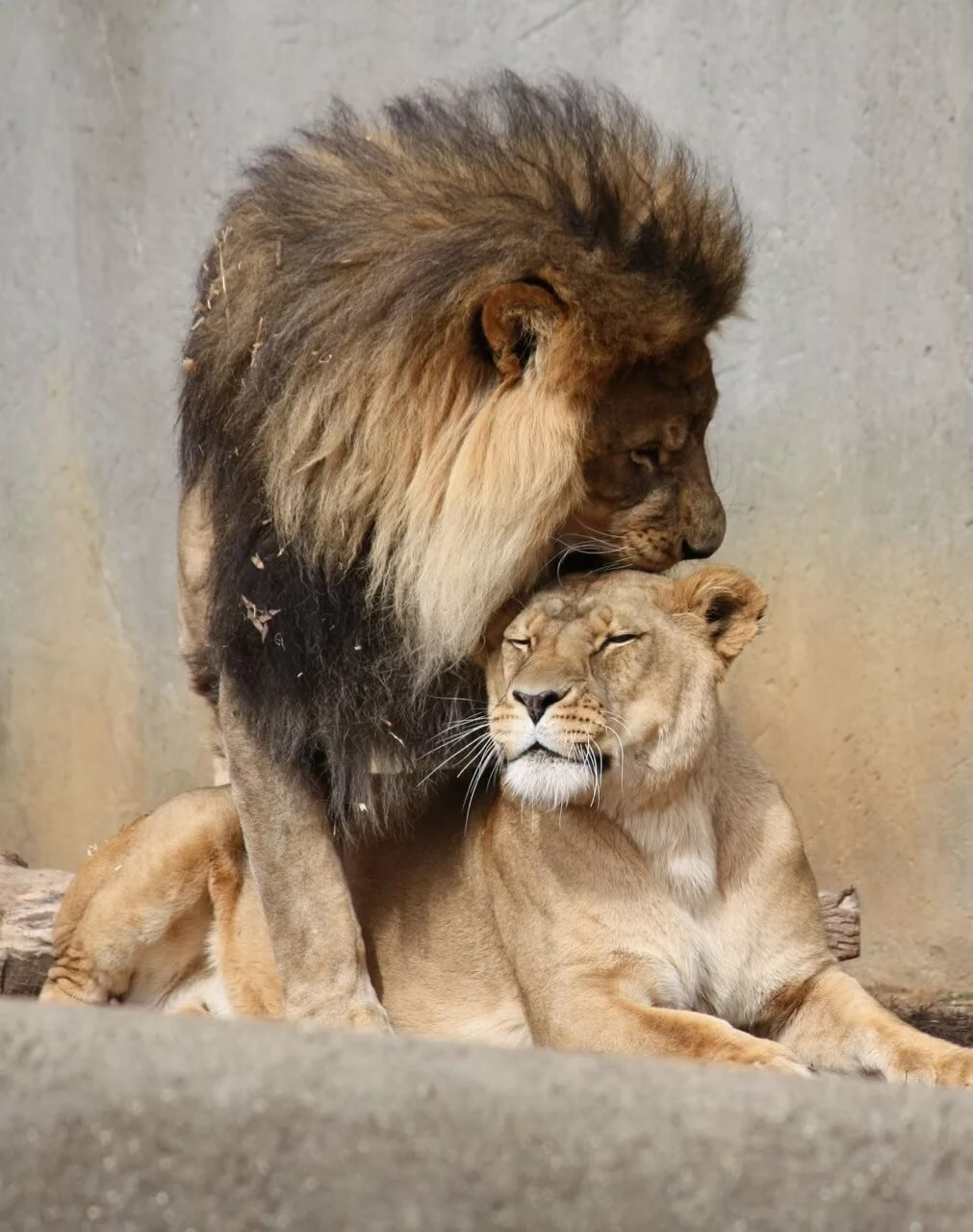 Картинки надписями, чувства в картинках с животными любимой