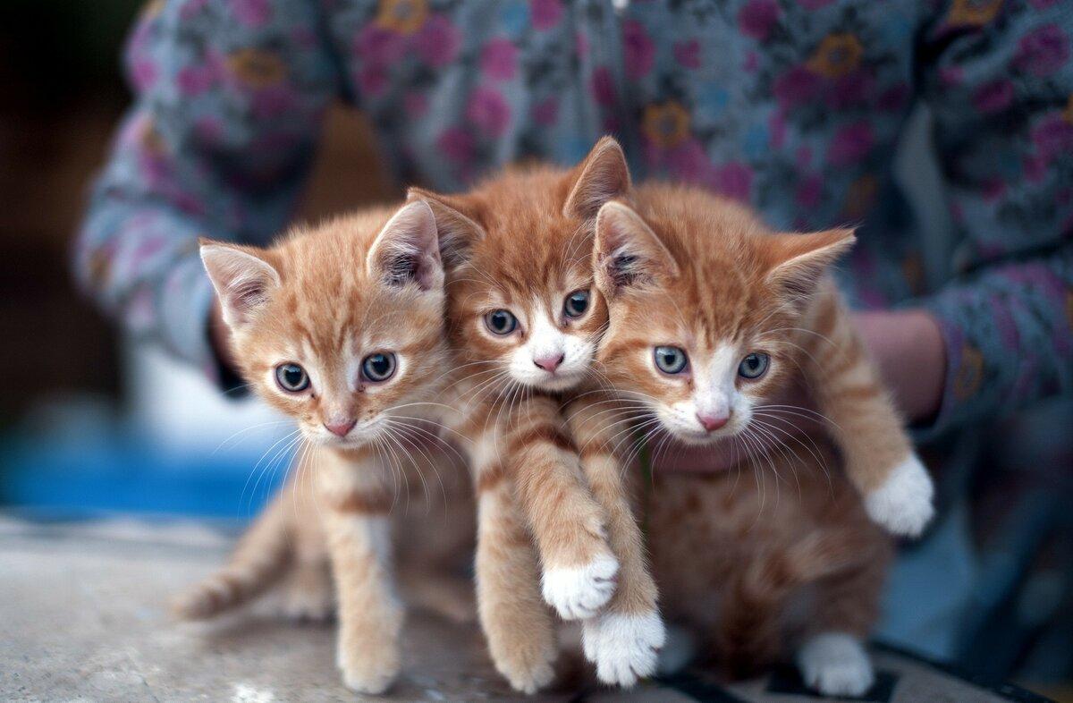 Картинки картинки котята