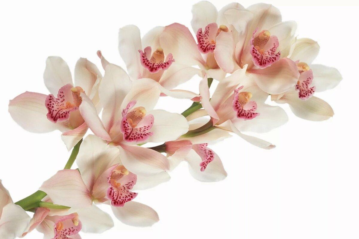 Открытки с орхидеями для фотошопа