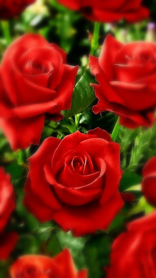 Картинки цветы красивые букеты розы на аву