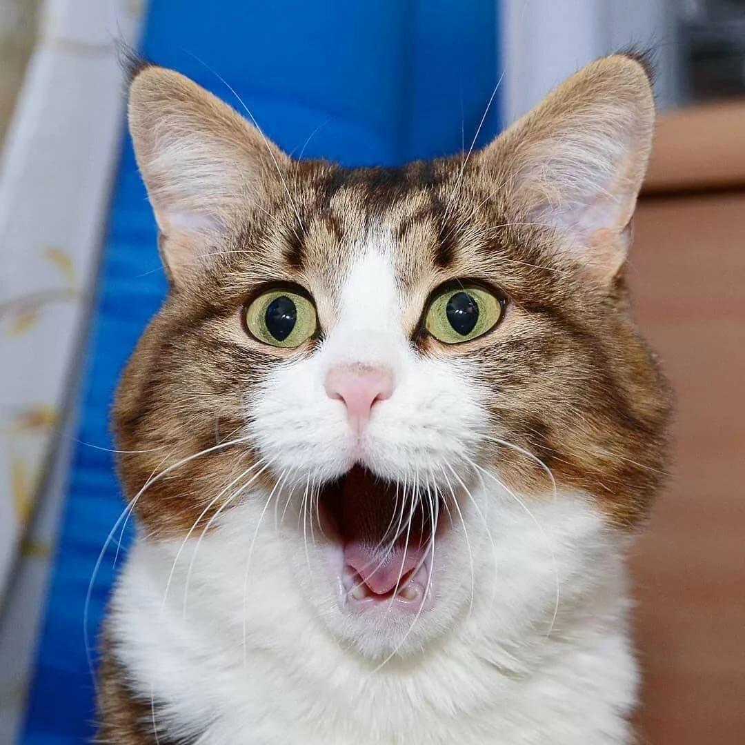 Кошачьи картинки смешные