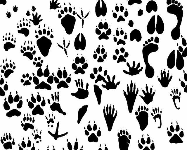 Следы разных зверей в картинках