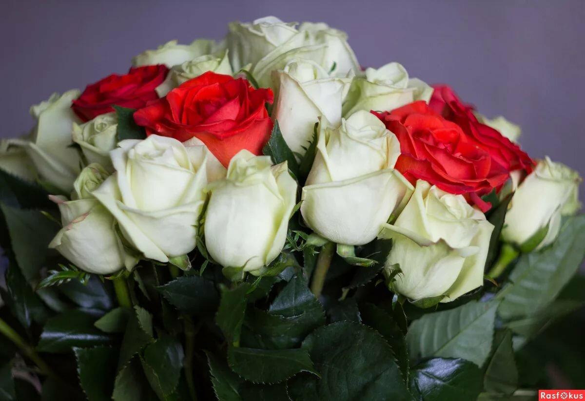 Картинки розы шикарной девушке