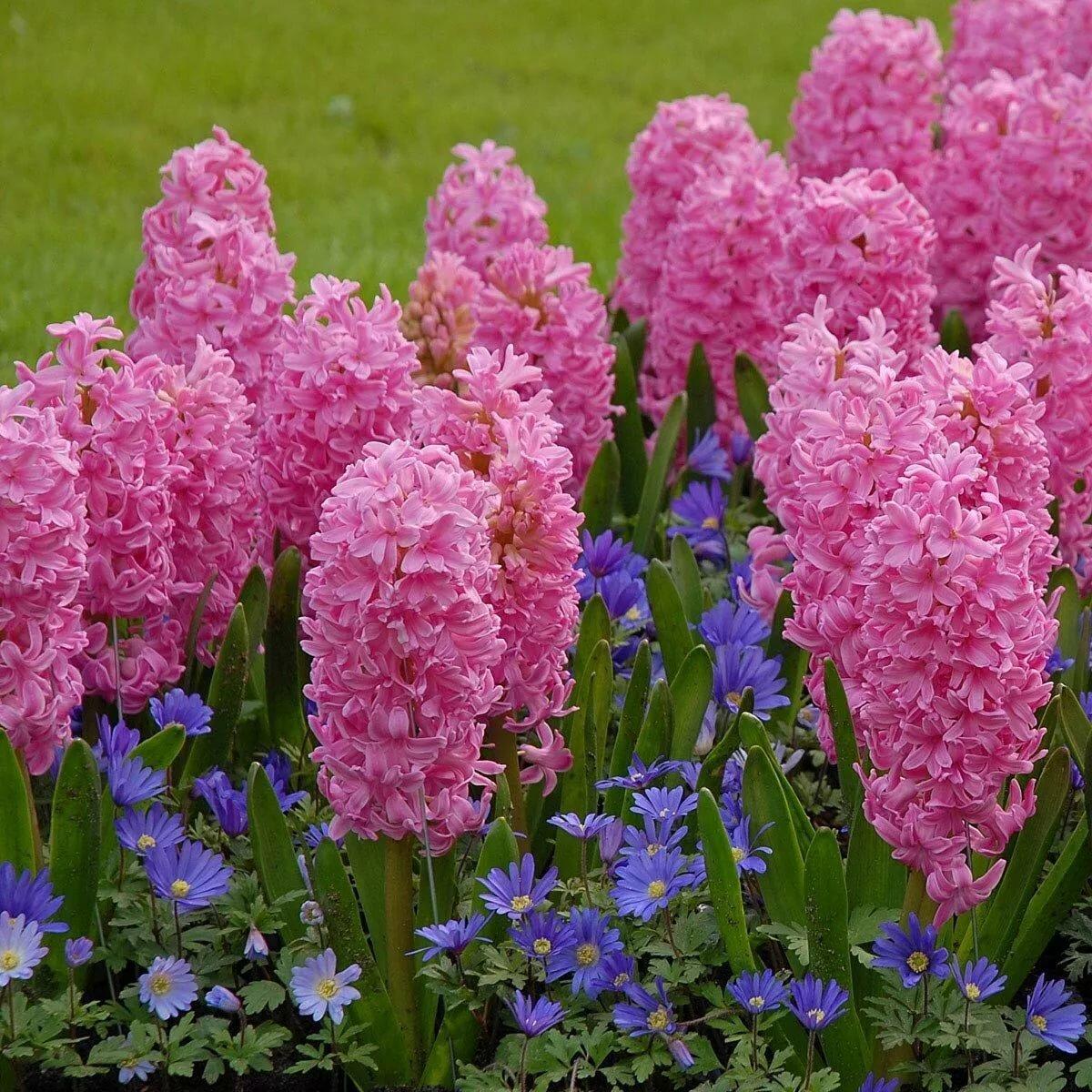 Многолетние цветы в саду в картинках