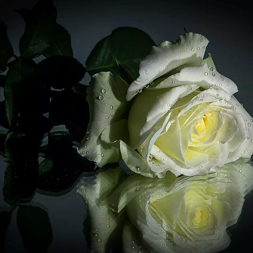 самые красивые картинки на всем белом свете