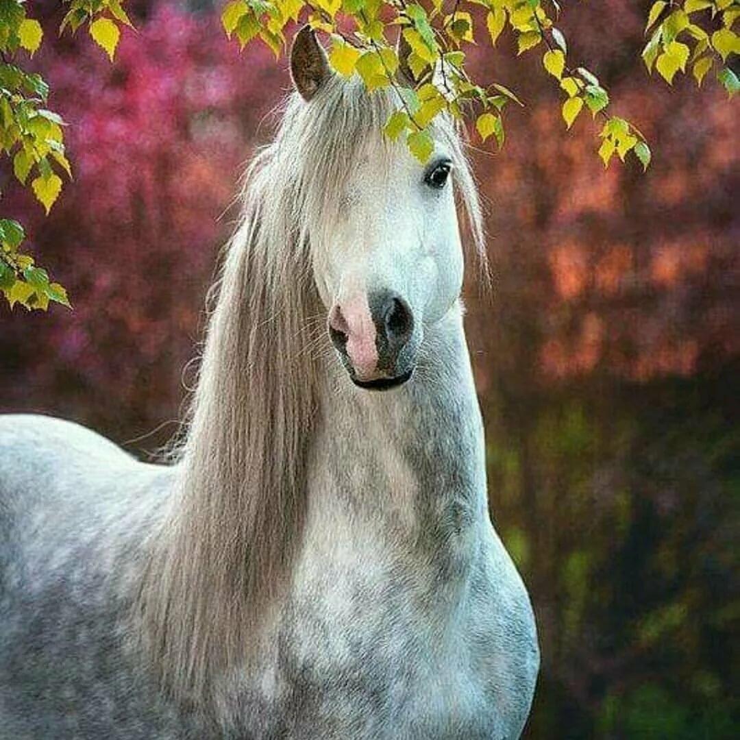 Картинки самых красивых в мире лошадей