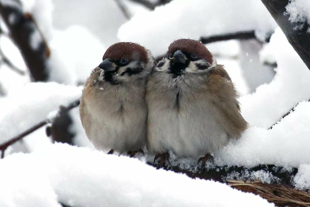 Картинки про птиц зимой