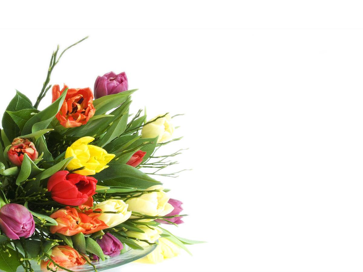 Картинках, открытка с тюльпанами без текста