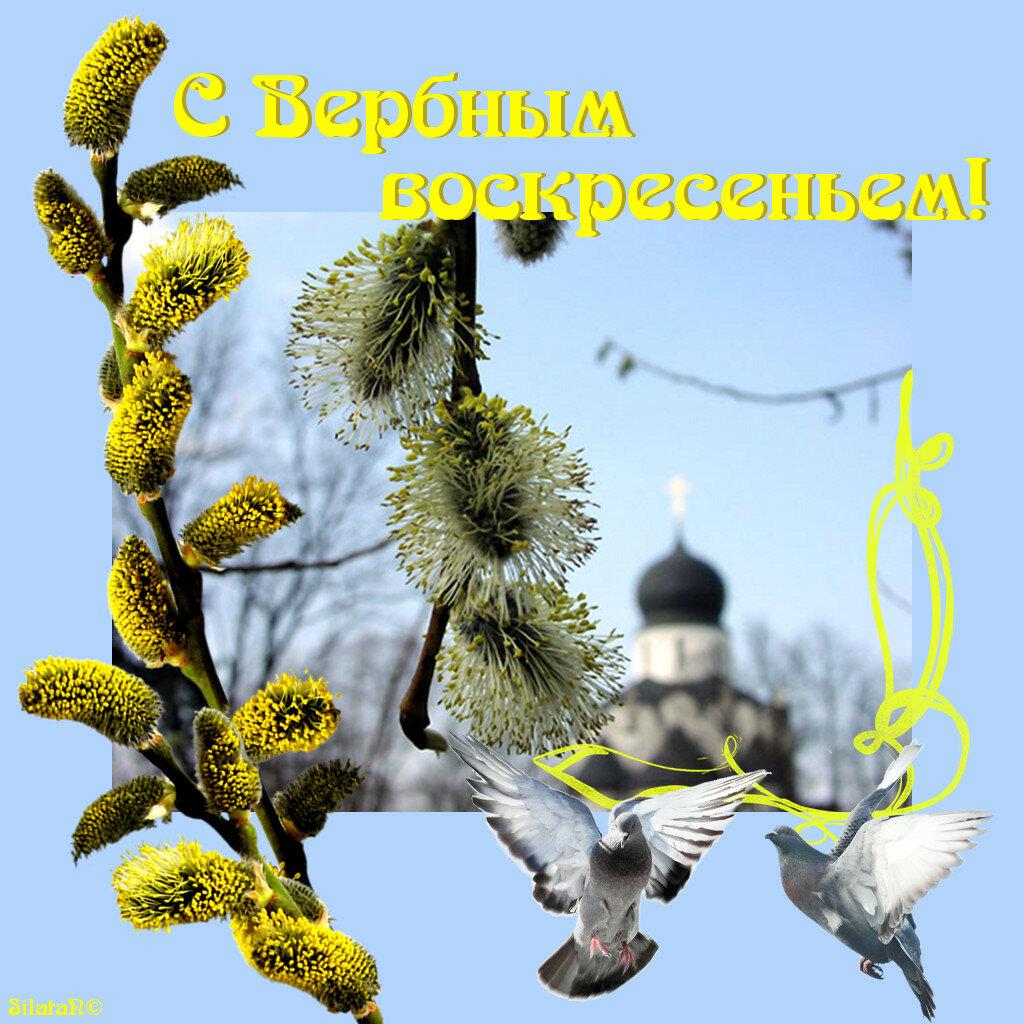 Вербное воскресение открытки фото