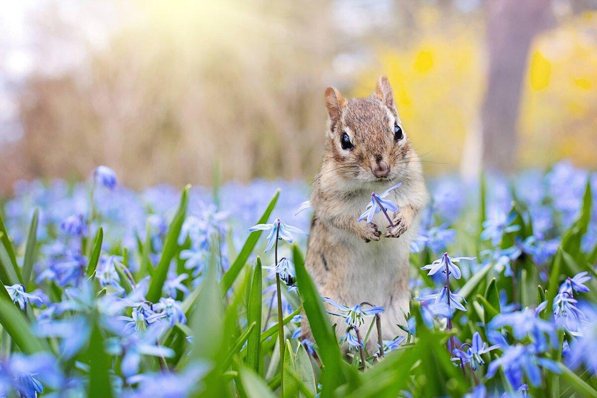 Цветы для, картинки весна красивые прикольные