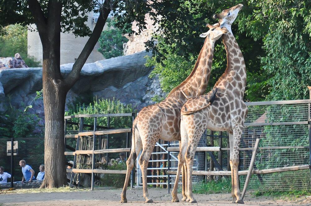 Картинки животных московского зоопарка