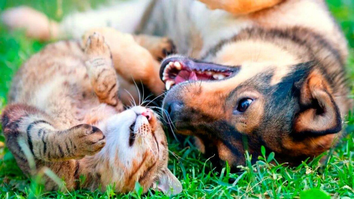 Коты и собаки вместе фото