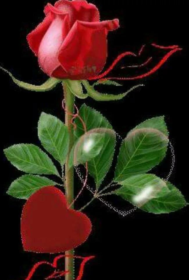 Днем рождения, открытки цветы поцелуи